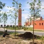 Nasadzenia drzew w Sanktuarium w Krakowie-Łagiewnikach