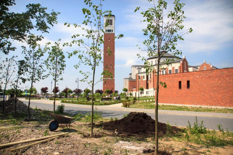 Nasadzenia drzew przy Sanktuarium w Łagiewnikach
