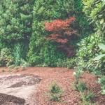 Duży ogród na Woli Justowskiej w Krakowie - rewitalizacja